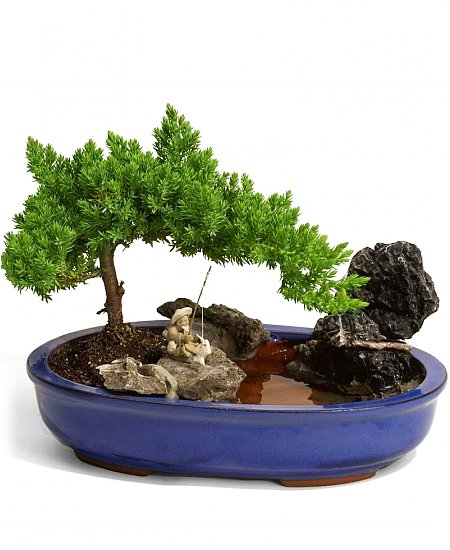 Zen Garden Plants Zen Awakenings Bonsai Garden